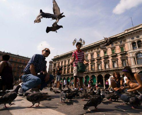 pigeons-229932_1280